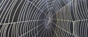 Wat is een spin in het web?